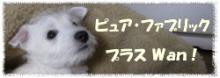 ファブリック&犬の生活雑貨◆ピュア・ファブリック プラス Wan!◆